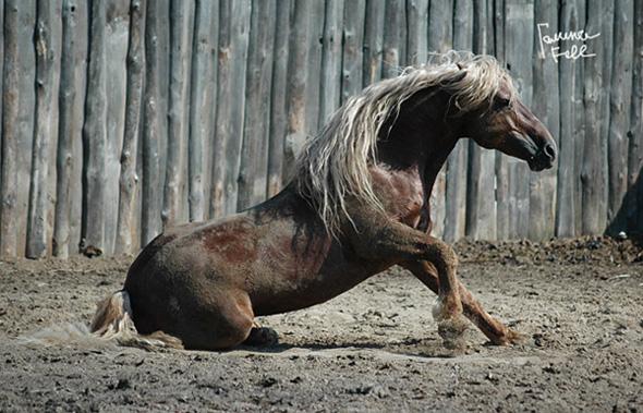 http://www.equestrian.ru/photos/user_photos/a_da63c5.jpg