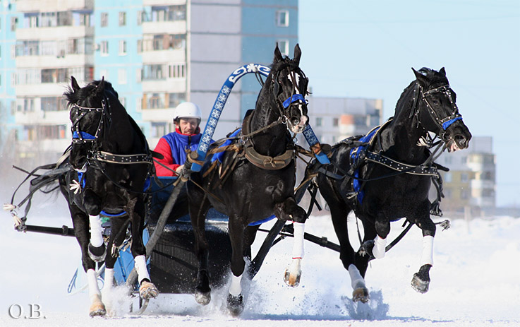 http://www.equestrian.ru/photos/user_photos/a_e43550.jpg