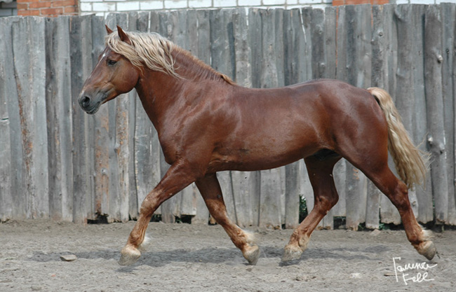 http://www.equestrian.ru/photos/user_photos/a_ecd475.jpg
