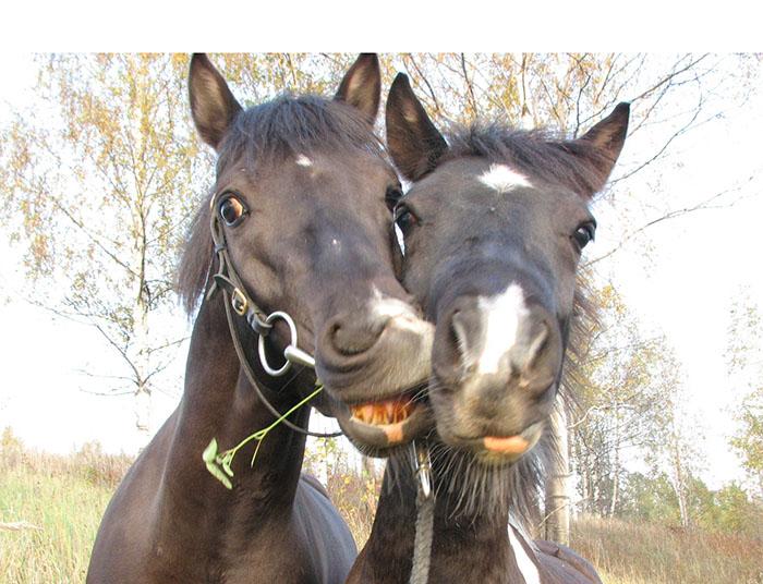 http://www.equestrian.ru/photos/user_photos/a_f9f835.jpg
